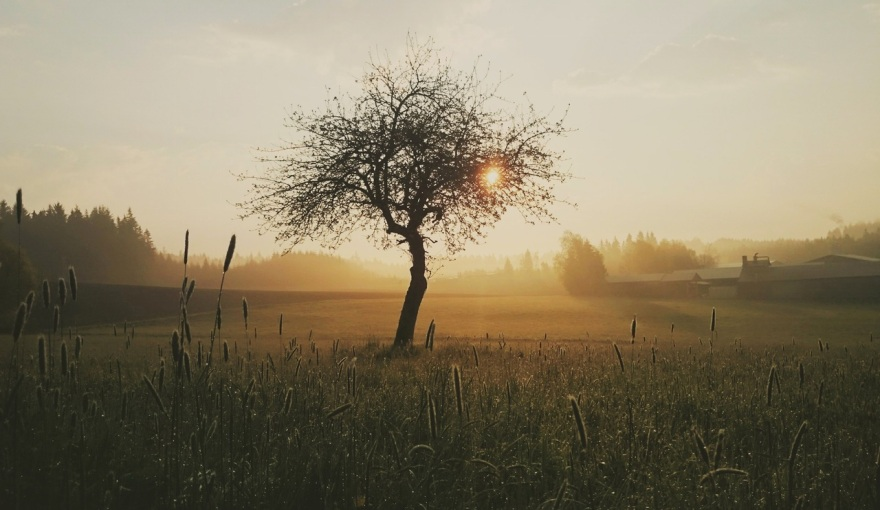 tree-morning-nature-sunrise-163513